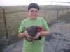 San Antonio chickens 2