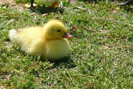 duck2-morgue-file