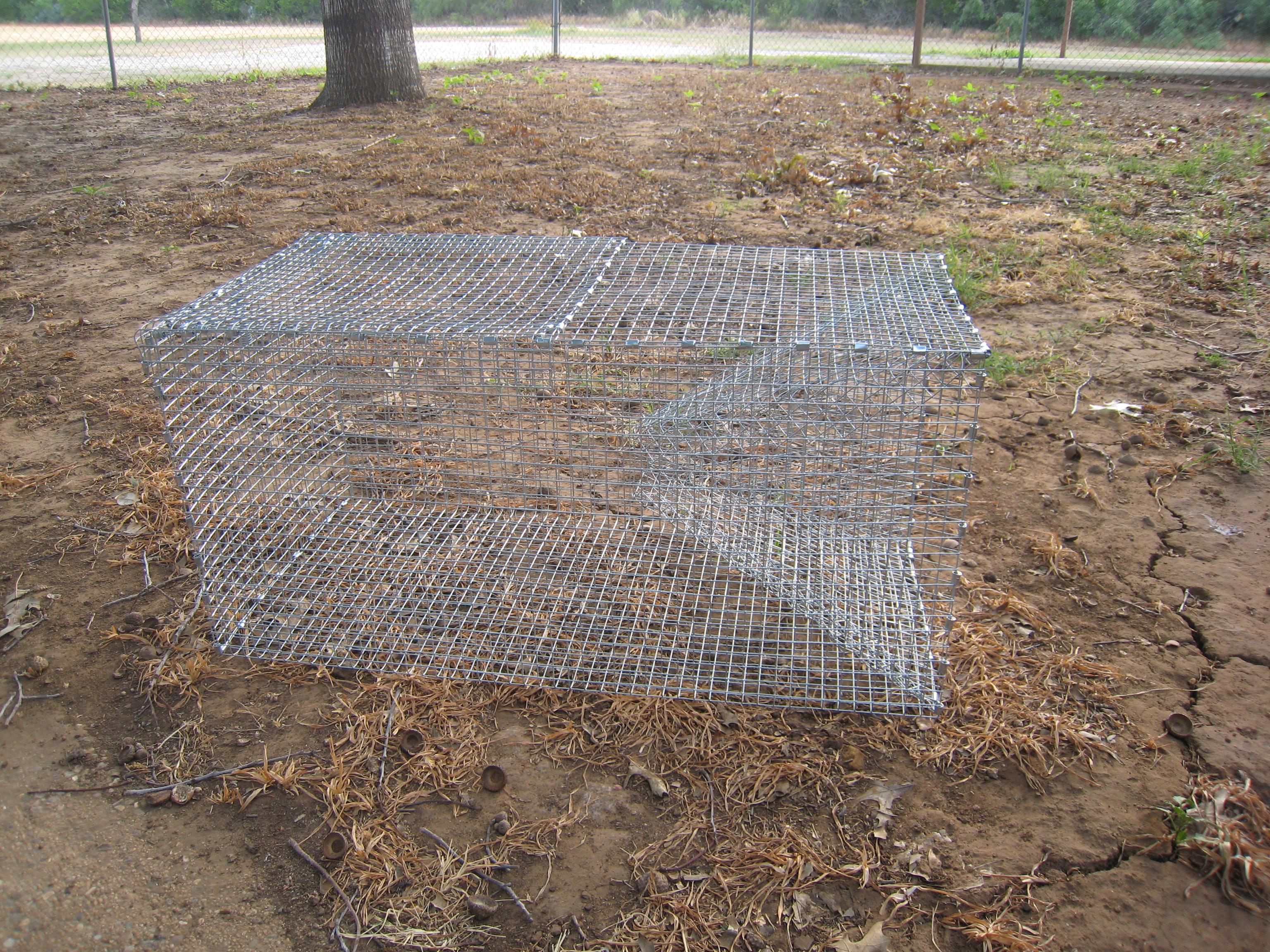 Snake trap photos